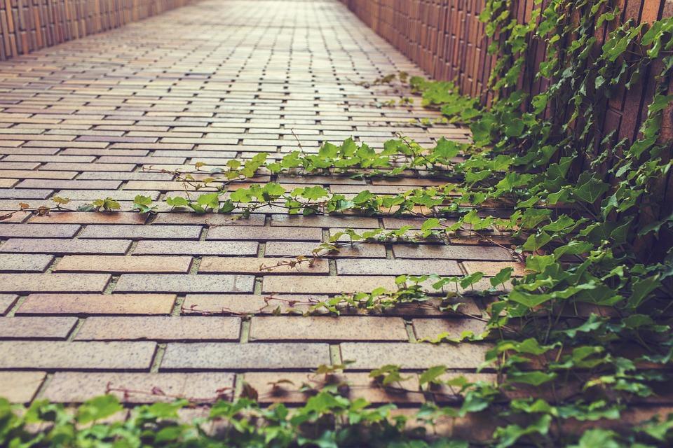 Foliage on a brick path